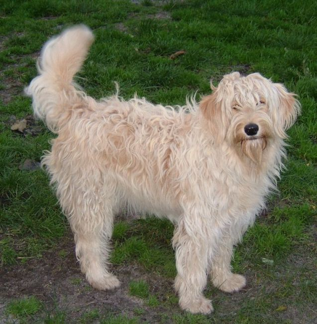 Retired Dogs For Sale From Breeders